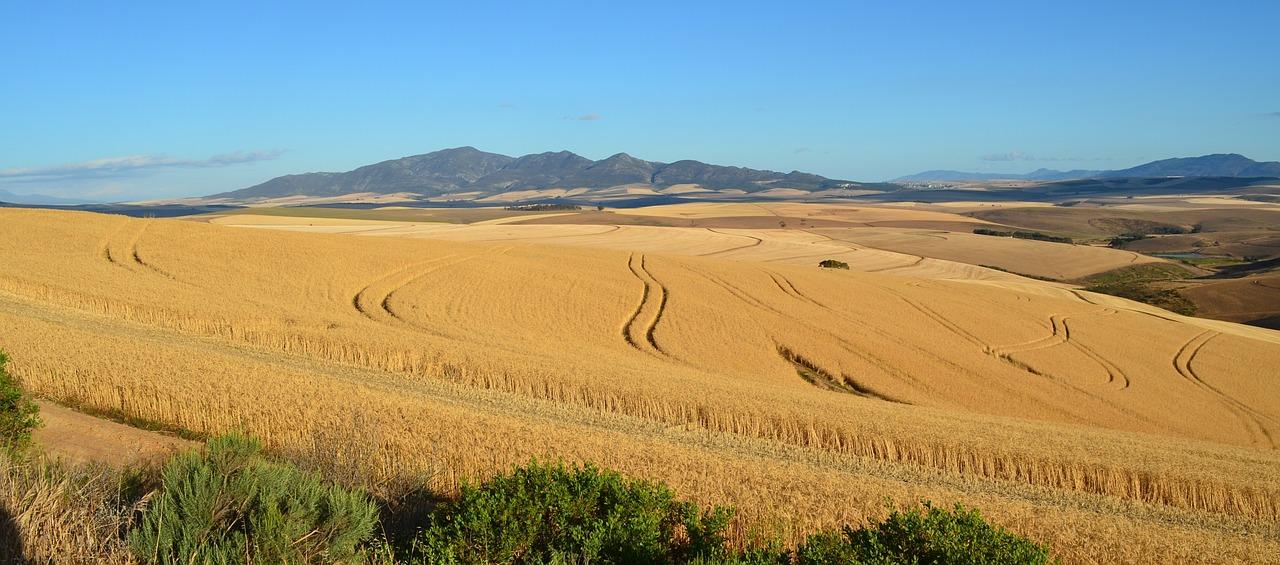 Agricultura prevé un descenso del 19,5% para la cosecha de cereal otoño-invierno 2019