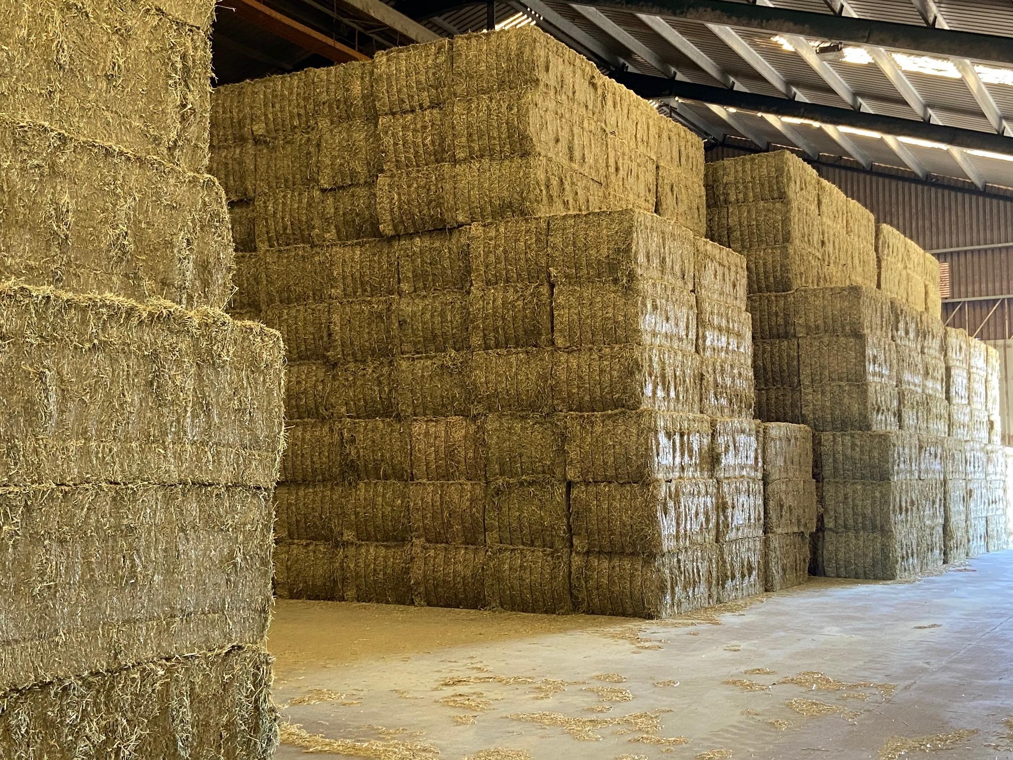 La alfalfa deshidratada española se exportó a más de 55 países en la campaña 2020-21